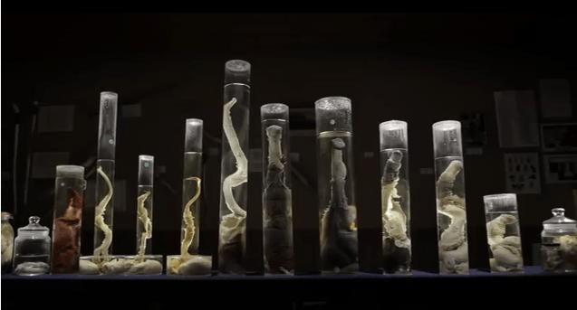penis museum