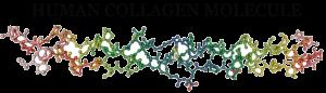collagen penis enlargement