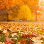 Hello Fall! Sale on Phallosan, PEXtender & Bathmate!